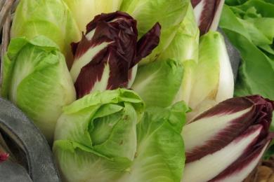 Da gerade in der Winterzeit der Chicorée ein sehr gesundes Gemüse ist und zum Beispiel mit Orangen oder Äpfeln angereichert ein sehr frischer und schmackhafter Salat ergibt, ist es ein sehr wertvolles Gemüse.
